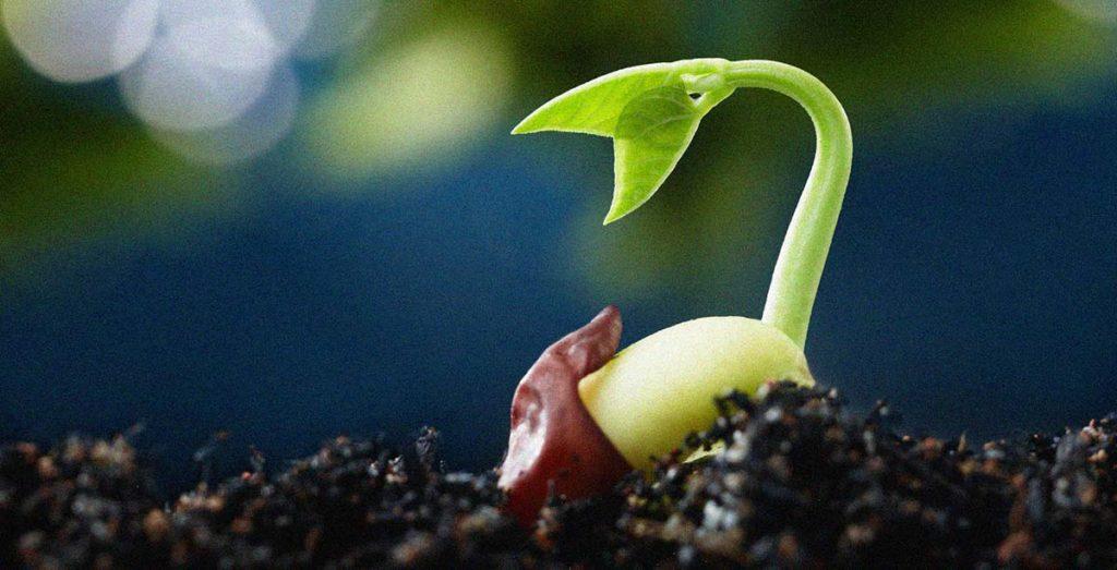 léčba pomocí klíčku a semen