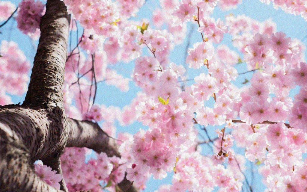 Jak Voní jaro