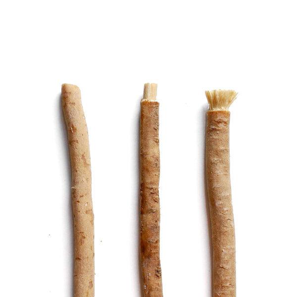 kořen stromu salvadory perské k čištění zubů je známý jako přírodní kartáček na zuby