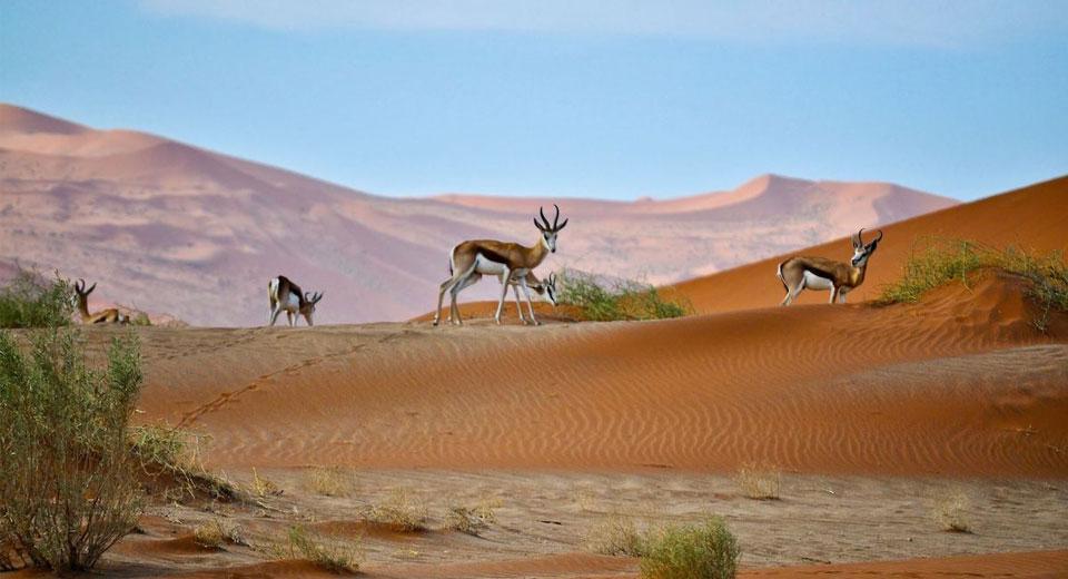 přírodní kartáček obnovuje pouště