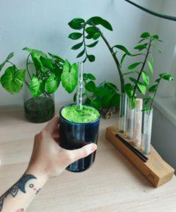zelený nápoj