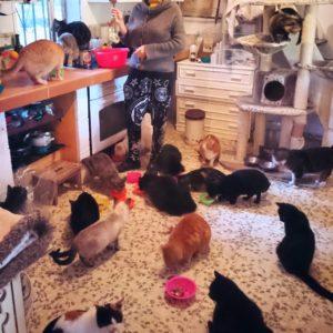 Život v záchranné stanici pro kočky aneb proč kastrovat